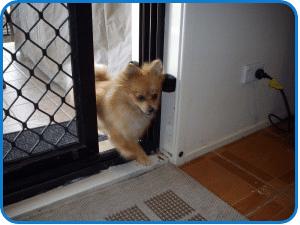 dog walking thru open door - las vegas