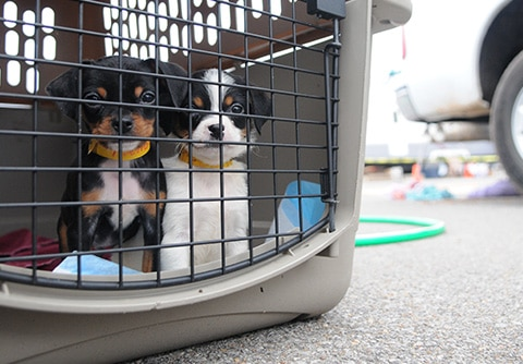 Pet Carrier Evacuation