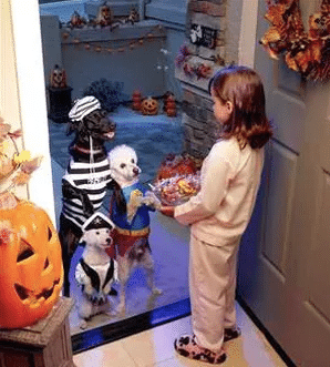 Halloween Pets - Candy and Kids