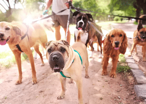 5 Signs you need a Dog Walker   Las Vegas