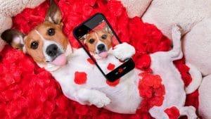 Dog Valentine - Las Vegas Dog Walker
