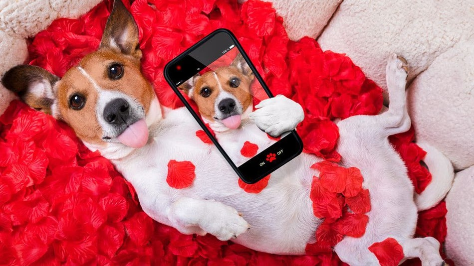 5 Gifts For Your Furry Valentine