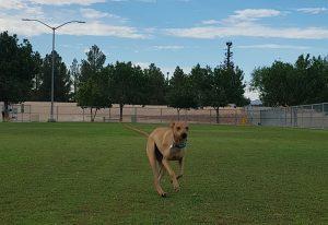 dog parks las vegas