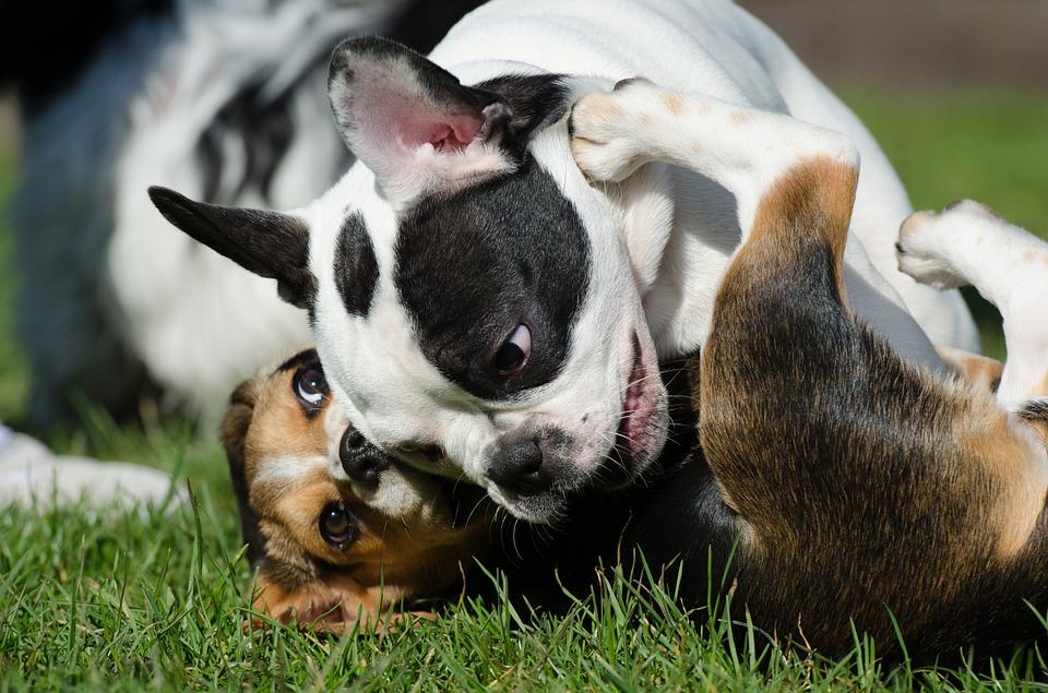 Dog Parks Las Vegas- Top 5