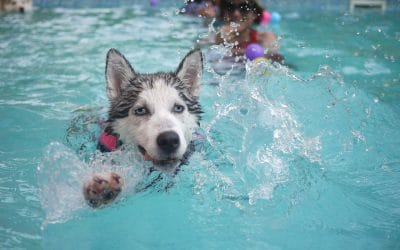 dog water therapy in las vegas