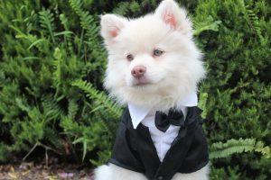 dog in your wedding in las vegas
