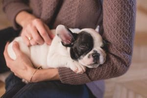 puppy care las vegas