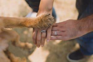 dog in your wedding las vegas
