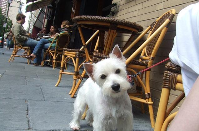 Top Pet Friendly Restaurants Las Vegas