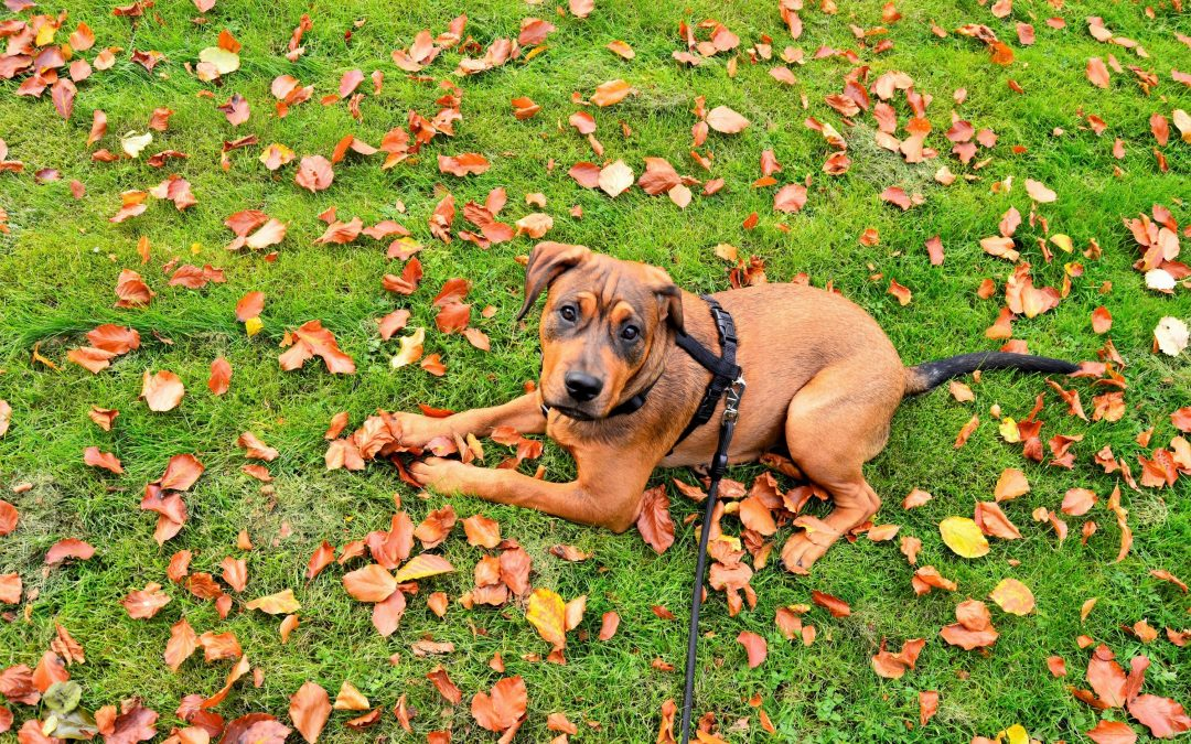 5 Things For You And Your Dog To Do This Fall Vegas