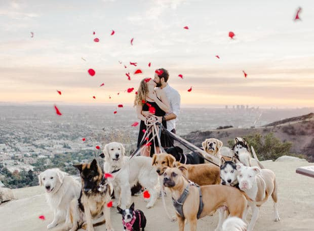 man proposes with 16 dogs
