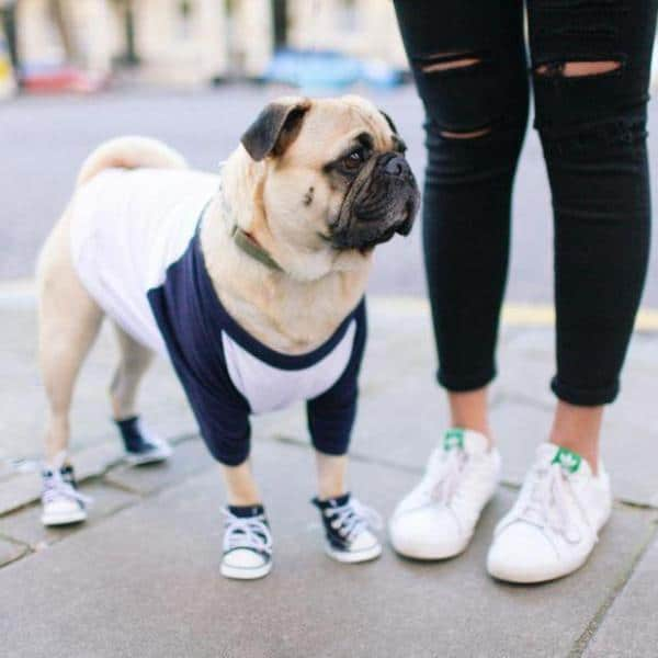 Top 5 Cutest Pet Clothes of 2019