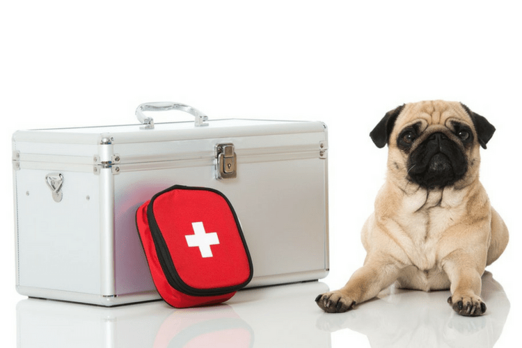 How To Keep Your Pet Safe Before, During, and After an Earthquake