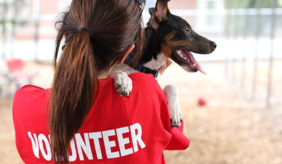 Where to Volunteer With Animals Las Vegas