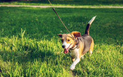 Top 5 Benefits of Daily Exercise for Dogs