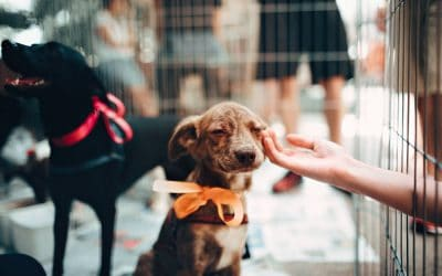 Animal Rights Awareness Week: How You Can Help