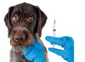 Should I Vaccinate My Pet?