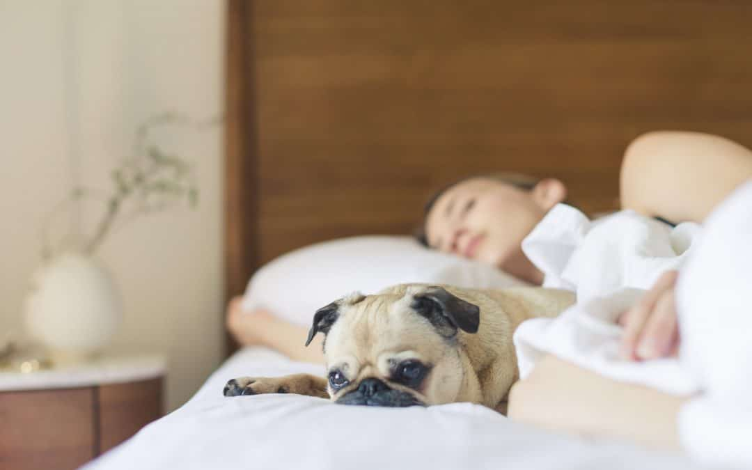 Top 10 Pet Friendly Hotels in Las Vegas
